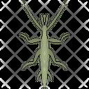 Grasshopper Insect Invertebrates Icon