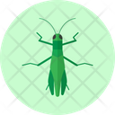 Grasshopper Insect Animal Icon