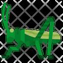 Grasshopper Locust Insect Icon