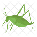 Insect Grasshopper Flying Insect Icon