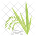 Green Barley Icon