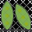 Green Bean Green Pod Icon