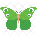 Green Clipper Butterfly Icon