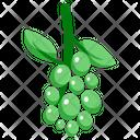 Green Grape Icon