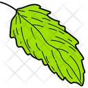 Green Leaf Leaf Foliage Icon