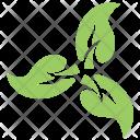 Green Leaf Flower Icon