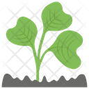 Green Sprout Growing Seed Plant Growing Icon