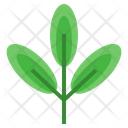Green Tea Sprout Organic Icon