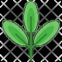 Green Tea Sprout Organic Icon