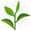 Green Tea Leaf Icon