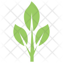 Grey Willow Leaves Icon