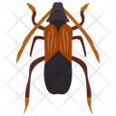 Ground Beetle Insect Scarab Beetle Icon