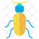 Ground Beetle Icon