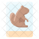Groundhog Photo Icon