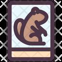 Groundhog Photo Icon