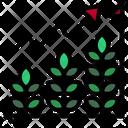Grow Plant Icon