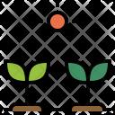 Grow Seed Icon