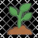 Grow Growing Growth Icon