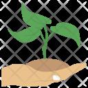 Growing Growth Development Icon