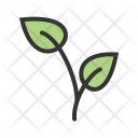 Growing Plant Icon