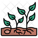 Growth Nature Seed Icon