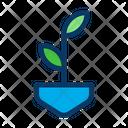 Plant Grow Plant Leaf Icon