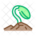Soy Growth Bean Icon