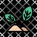 Plant Plantation Growth Icon