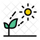 Sun Plant Growth Icon