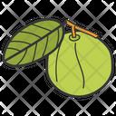 Guava Healthy Diet Healthy Food Icon