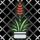 Guzmania Flora Flower Icon