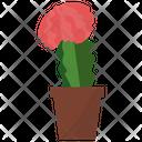 Gymnocalycium Potted Plant Icon