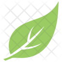Garden Hackberry Magnolia Icon