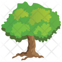 Hackberry Agriculture Evergreen Icon