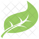 Shape Garden Hackberry Icon