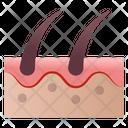 Hair Follicle Icon