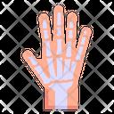 Hand Joints Hand Bones Hand Skeleton Icon