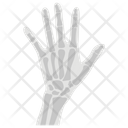 Hand Skeleton Appendage Anatomy Icon