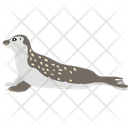 Harbor Seal Icon