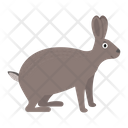 Hare Rabbit Savannah Icon