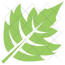Hawthorn Leaf Icon