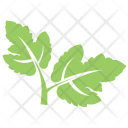 Hawthorn Leaves Icon