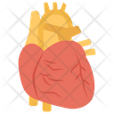 Cardiology Heart Organ Icon