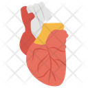 Cardiology Human Heart Body Organ Icon