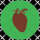 Cardiology Anatomy Cardiovascular Icon
