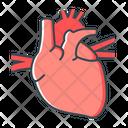 Heart Cardiology Anatomy Icon