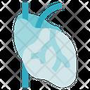 Organ Anatomy Heart Cardiovascular Icon