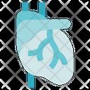 Biology Heart Organ Icon