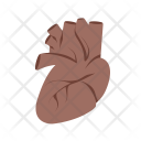Heart Body Organ Icon