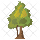 Hemlock Tree Icon